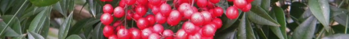 Red Berry Bunch